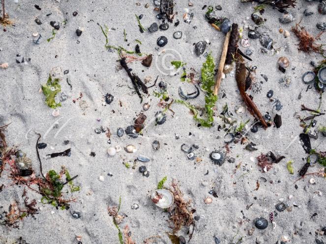 Heanish beach, Tiree-8290221