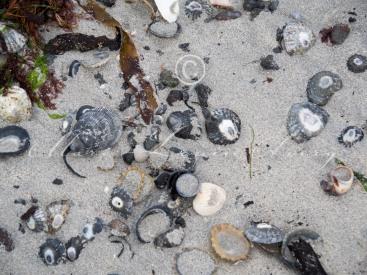 Heanish beach, Tiree-8290244