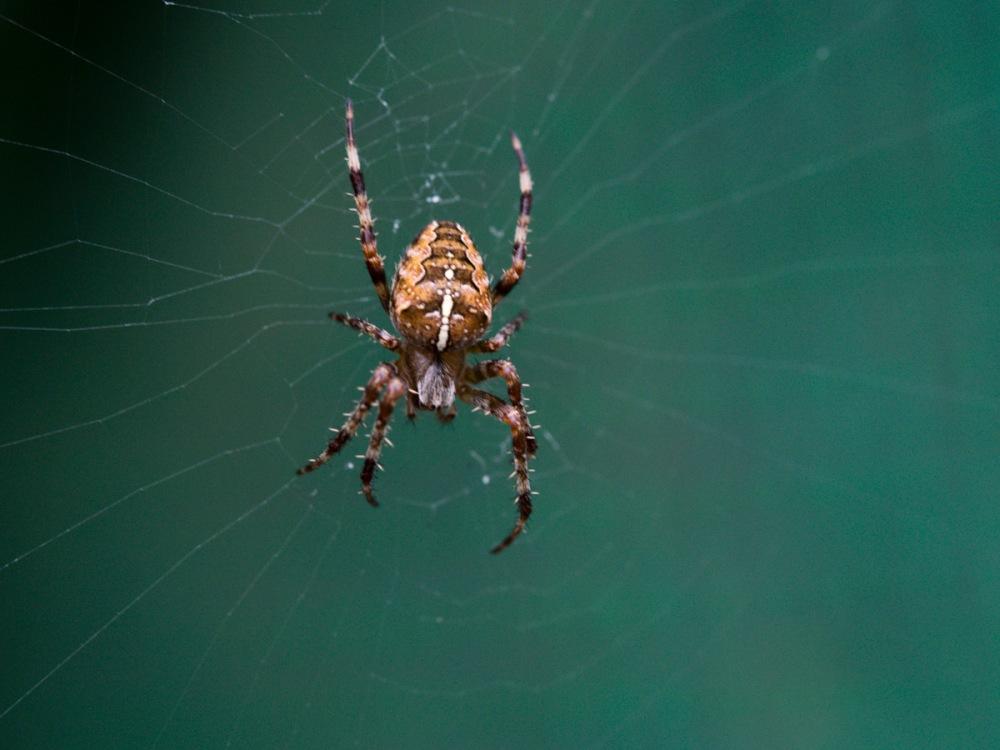 Spider-9130018